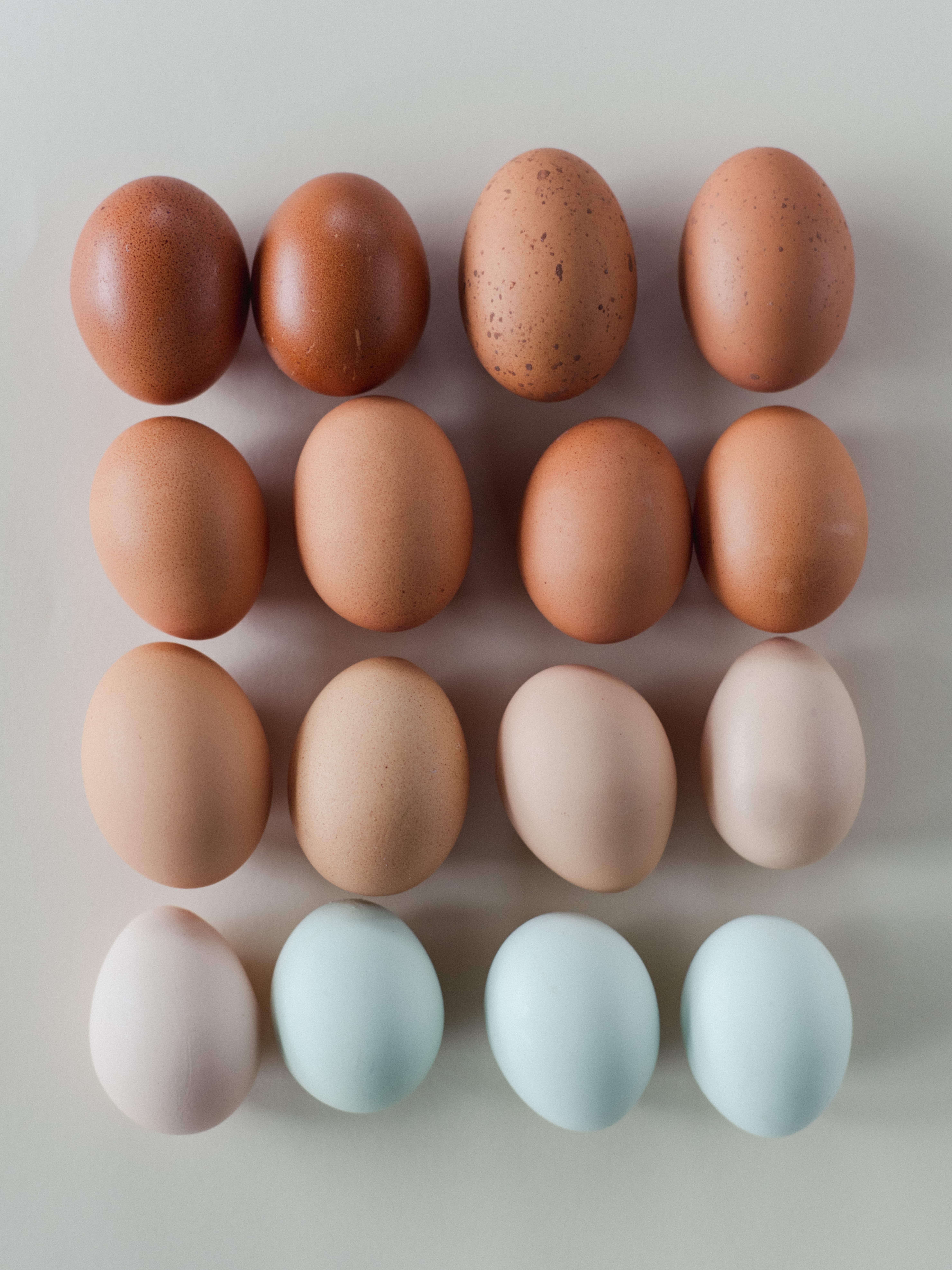MegSexton_eggs_0002